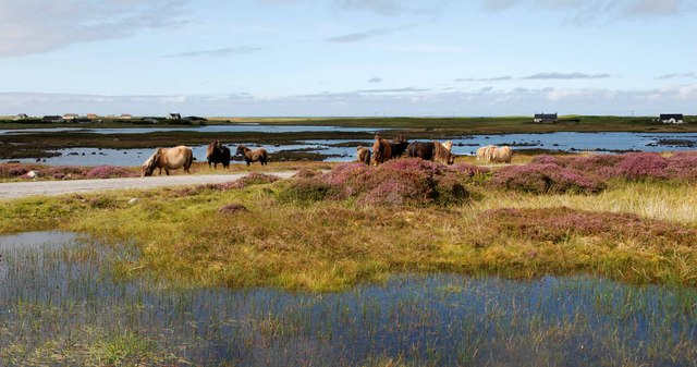 Wild Eriskays by Loch Druidibeag