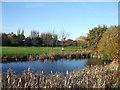 TQ8790 : Ball Pond by terry joyce