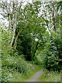 SN7167 : Footpath and cycle route near Ystradmeurig, Ceredigion by Roger  Kidd