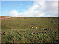 SD6379 : Casterton Stone Circle by Karl and Ali