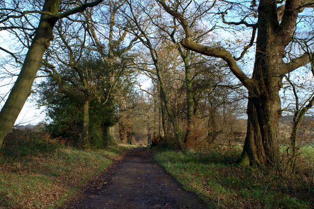 Hollybank Lane