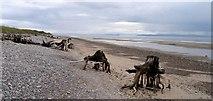 NJ0064 : Erosion of Culbin Forest beach by Robert W Watt