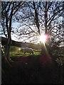 SO2612 : Sheep near Garn Ddyrys by Gareth James