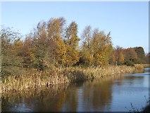 SK0305 : Autumn on the Curly Wyrley by John M