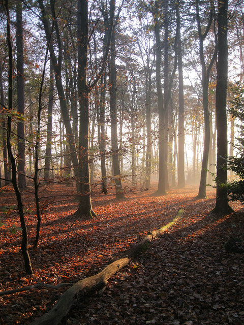 Fallen leaves in Brandon Woods