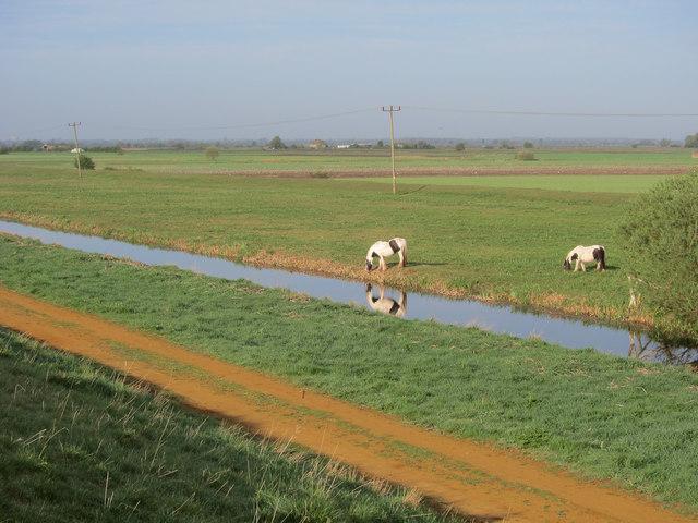 Horses grazing the counterwash