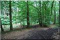 SU7926 : Sussex Border Path by N Chadwick