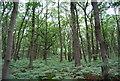 SU7927 : Woodland, Rake Hanger by N Chadwick