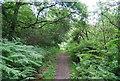 SU7927 : Sussex Border Path through Bracken by N Chadwick