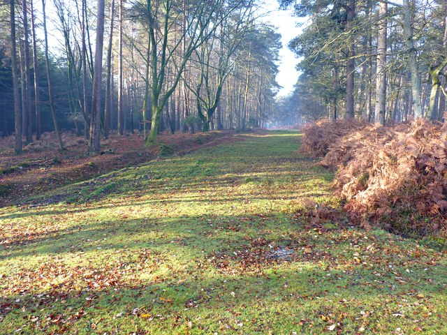 Grassy Track near Acres Down