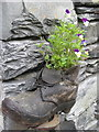 NY3406 : Old clog, new use, Grasmere by Peter Turner
