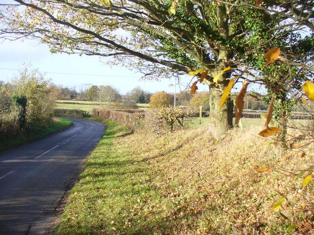 Roadside Verge, Harper's Road