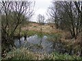 H9989 : Marshy ground, Toome by Kenneth  Allen