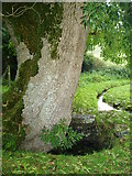 S4117 : Holy Well at Ballyquin, near Carrick-on-Suir by ethics girl