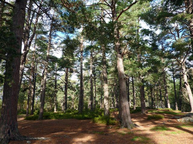 The upper camping area, Rothiemurchus campsite