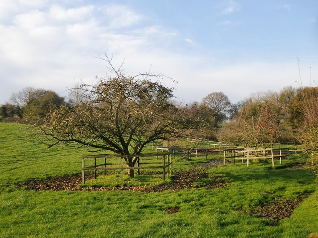 Fruit trees near Yew Tree Cottage (and a treat for the horses?)