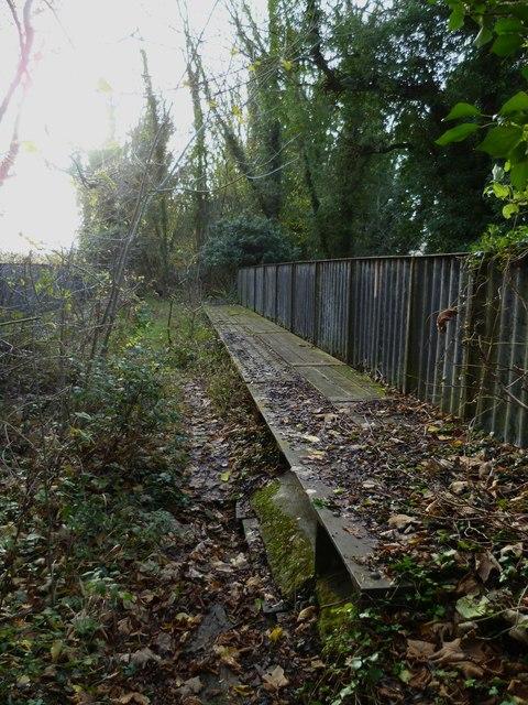 Disused railway north of Hockley viaduct (3)