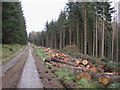 NT3535 : Recently felled trees, Traquair Forest by Jim Barton