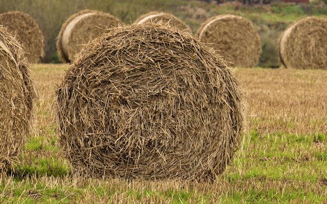 Straw bales near Lisburn