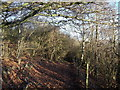 TQ3854 : Track in Oxted Downs by David Anstiss