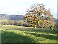 TQ0747 : Greensand Ridge, Shere by Colin Smith