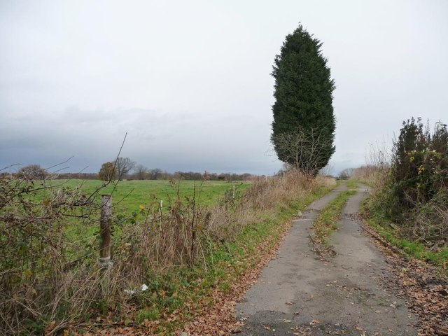 Conifer alongside a farm track