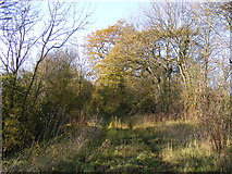 TM2768 : Track off the Kings Lane Bridleway by Adrian Cable