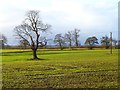 NZ2212 : Farmland, Manfield by Andrew Smith