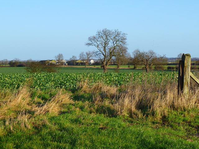Farmland, Manfield