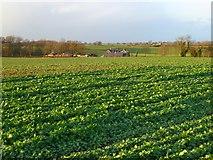 NZ2506 : Farmland, Croft-on-Tees by Andrew Smith