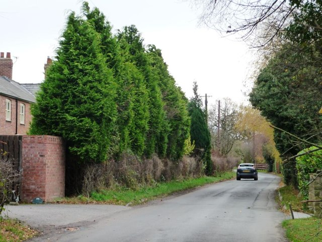 Leylandii Hedge Hiding Cherry Tree Farm 169 Christine