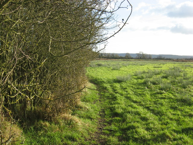 Thorn Hedge Providing A Very Effective 169 Dr Duncan Pepper Cc By Sa 2 0 Geograph Britain