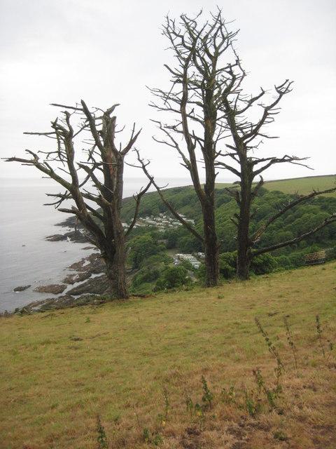 Dead trees above Church Cove