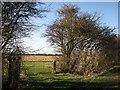 TL5259 : Gateway on Short Drove Way by John Sutton