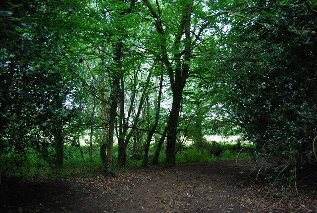 Woodland, Shufflesheep