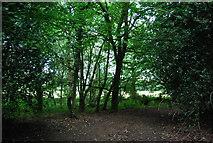 SU8429 : Woodland, Shufflesheep by N Chadwick