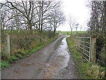 H4761 : Lane, Derrybard by Kenneth  Allen