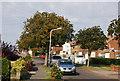 TQ5841 : Chestnut Tree, Chestnut Avenue by N Chadwick
