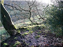 SE0023 : A wet corner in a patch of woodland, Cragg Vale by Humphrey Bolton