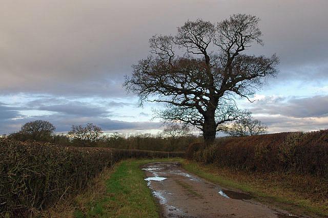 Bridleway to Pollymoor Farm