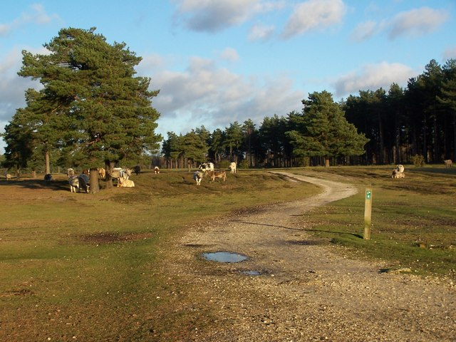 New Forest track near Longdown Inclosure