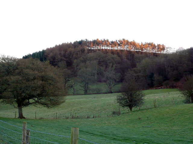 Woodland strip of trees above Gillamoor