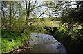 SO8480 : River Stour near Caunsall by P L Chadwick
