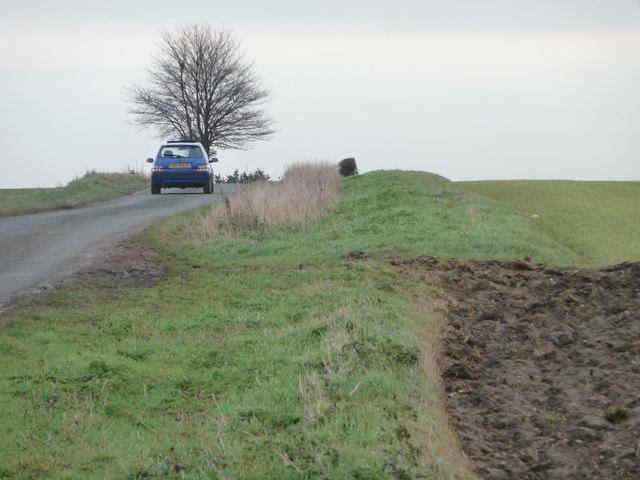 Crop change along Westfield Lane