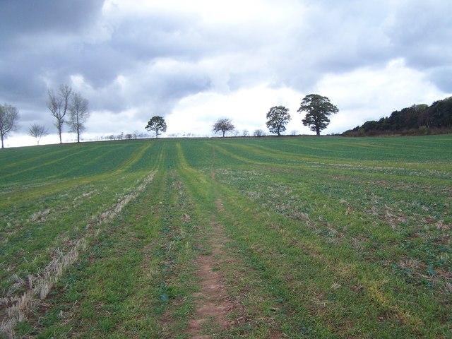 Footpath To Lizard Hill