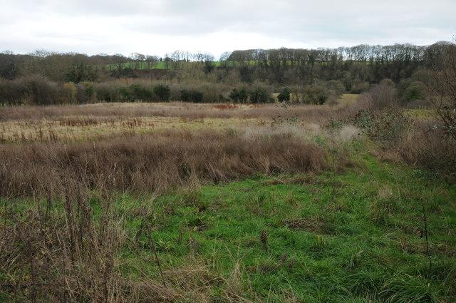 Rough grazing near Breinton