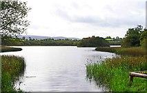 R5680 : Lough Bridget, near Ballynahinch, Co. Clare by P L Chadwick