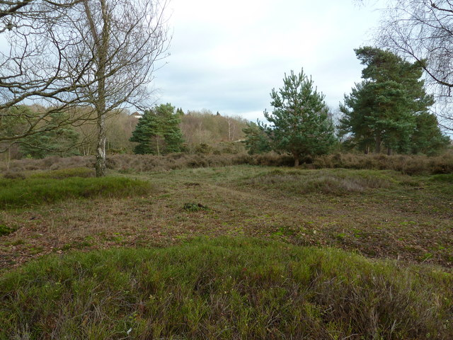 Heathland on the top of Stonepit Hill