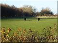 TF3222 : Cattle paddock near Irby Hall by Richard Humphrey