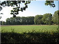 SP1563 : Poplars by the Alne by Robin Stott